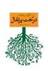 تصویر درخت پرتقال
